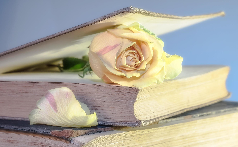 Les romans à l'eau de rose sont toujours prisés par les amateurs du genre.