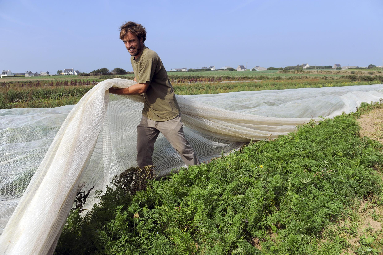 Ферма, где используются методы органического сельского хозяйства, Франция