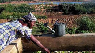 Maraîchage à Samé, près de Kayes au Mali. L'association GRDR met en œuvre dans cette province des programmes d'appui au secteur horticole.