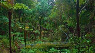 Une vue du paysage de l'île d'Ulva.