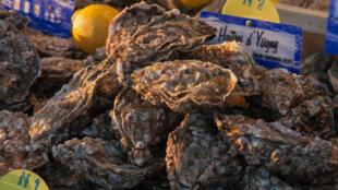 France - huîtres