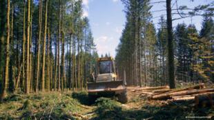 « Le Temps des forêts », un documentaire de François-Xavier Drouet.