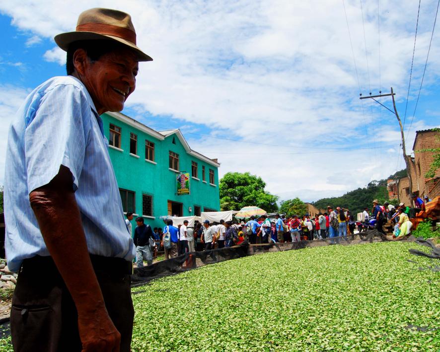 Hojas de coca secándose en La Asunta, en la provincia Sud Yungas de La Paz, Bolivia.