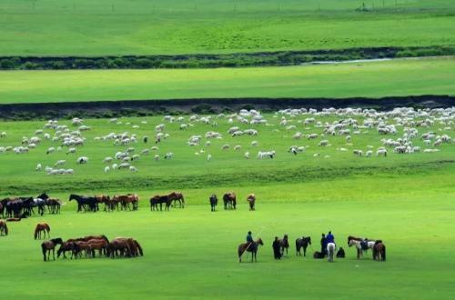 网传内蒙古草原景色