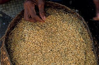 Un panier de riz.