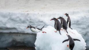 No período do Plioceno, há três milhões de anos, não havia calota glacial na Antártida.