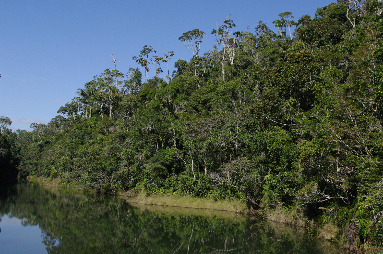 The Andasibe Mantadia forest