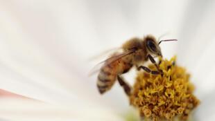 Le BeeRotor est équipé de capteurs optiques inspirés de la vision des abeilles.