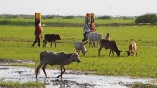 Tana Delta region in Kenya