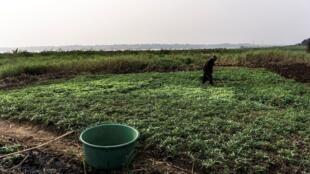 Un agriculteur congolais cultive sa terre, aux abords du fleuve Congo, le 19 juillet 2017 à Kinshasa (photo d'illustration).