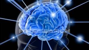 Memória, linguagem, movimentos, percepção visual e auditiva , fazem parte da capacidade cognitiva.