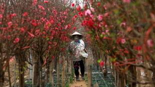 Vietnam - Nouvel an lunaire