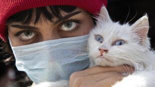 Qual é o risco de cães e gatos pegarem coronavírus