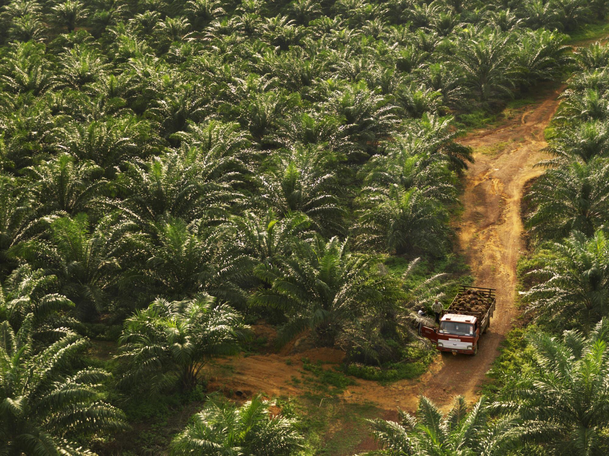 Une plantation de palmier à huile à Johor, en Malaisie.
