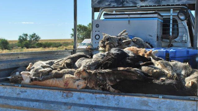 Brigitte Bardot enviou uma carta para o ministro do meio ambiente australiano, Greg Hunt, sobre o massacre de gatos selvagens.