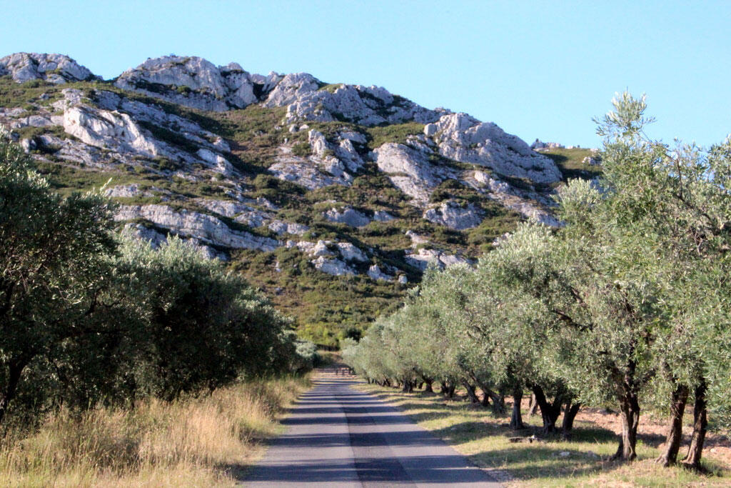 Xylella has not yet infected French olive groves, but there are concerns it could affect vineyards.