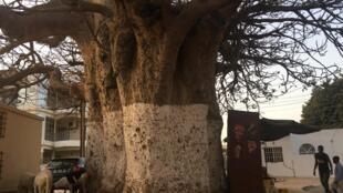 Iccen Kanya na fuskantar barazana a Nijar
