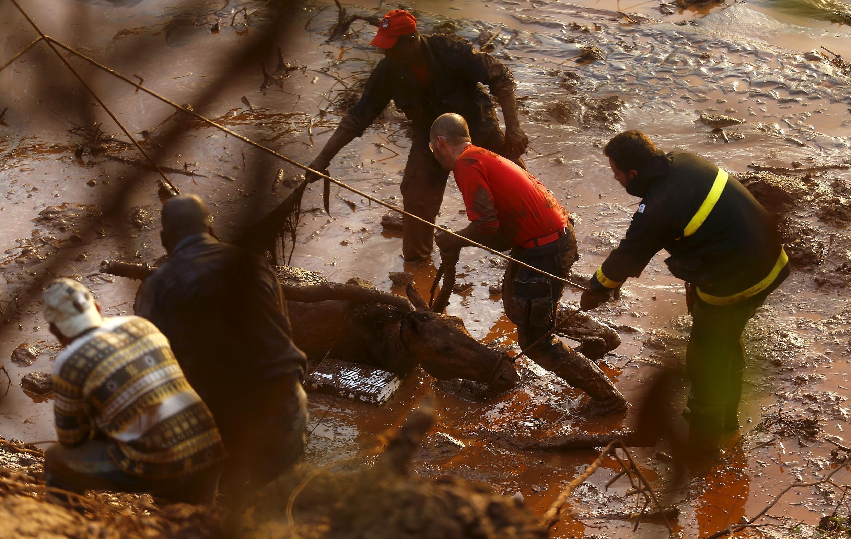 Equipes de resgate tentam salvar neste sábado (7) um cavalo atolado na lama em Bento Rodrigues.