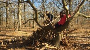 Elèves de la Forest International School Paris, sur leur cabane, dans la forêt de Mareil-Marly (78).