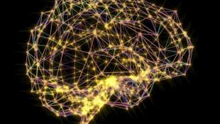 Cérebro ( imagem de ilustração)