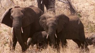 Le parc du Limpopo entre l'Afrique du Sud et le Mozambique.