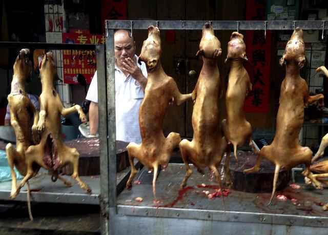 Comer carne de cachorro também é tradição na China, principalmente durante festivais.