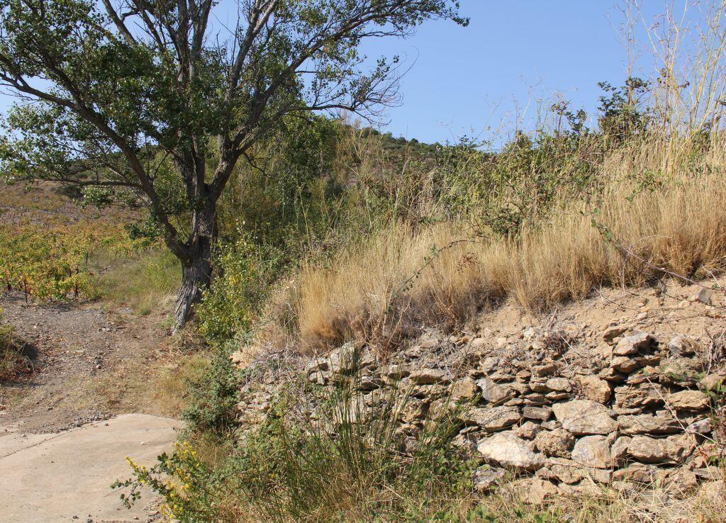Les vignerons veillent à la préservation du paysage viticole.