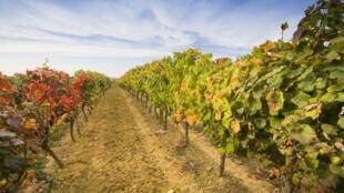 Des fonds publics chinois ont été utilisés pour acheter des vignobles français.