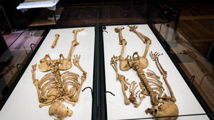 The two related Viking skeletons in Denmark's National Museum