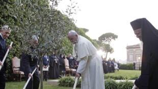 Les présidents Shimon Peres, Mahmoud Abbas, le pape François et le patriarche de Constantinople Bartholomée (de gauche à droite) plantent un olivier dans les jardins du Vatican, en 2014.