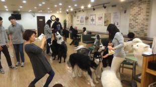 Au café Bauhaus de Séoul, les clients peuvent profiter de la compagnie des nombreux chiens de l'établissement.