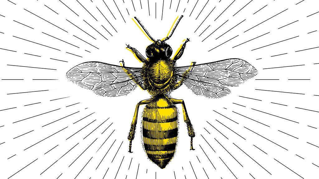 L'abeille africaine, le trésor méconnu du continent