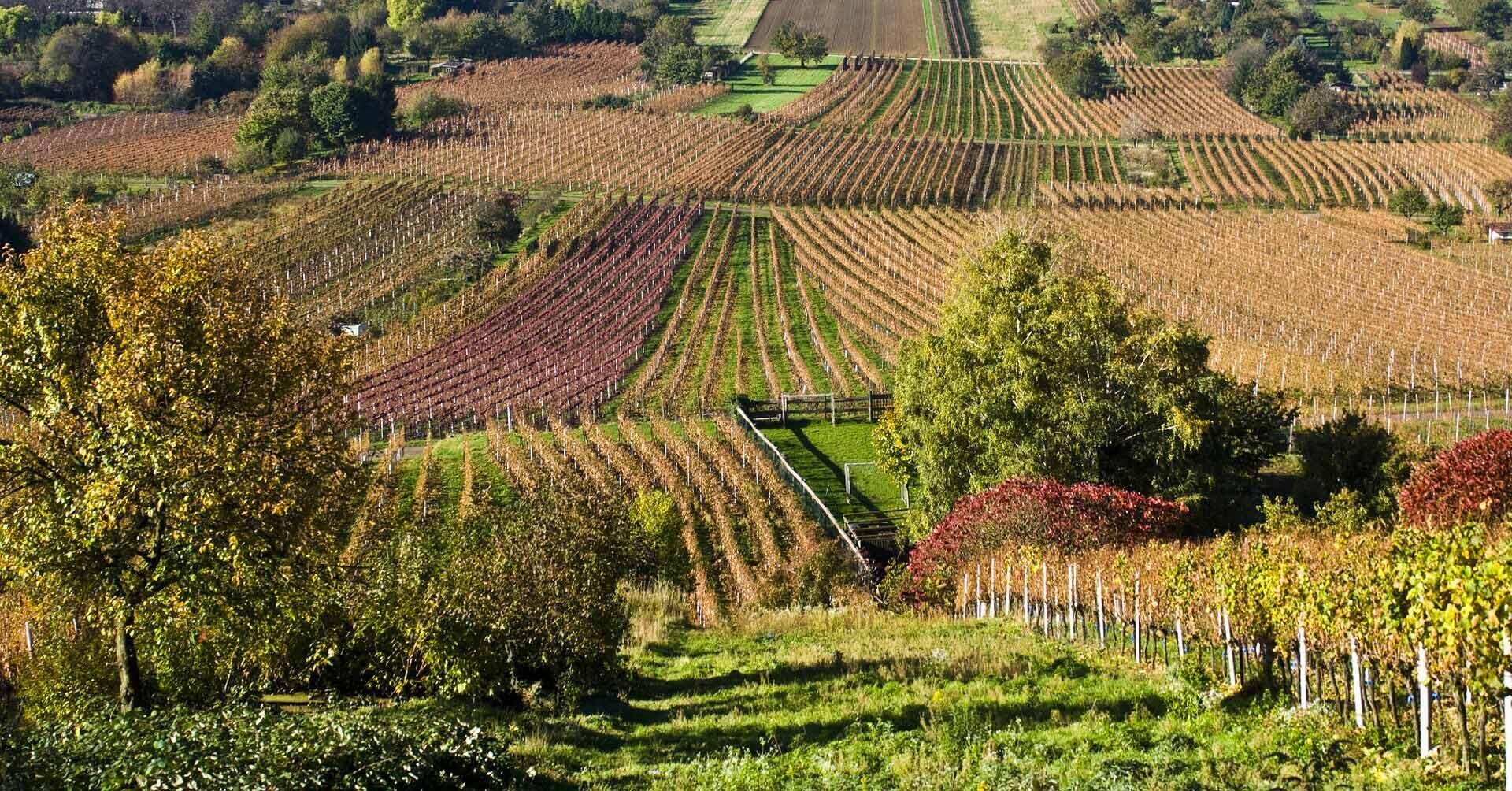 Accents-d'Europe-viticulture-vendanges-vin-agriculture--259876_1920