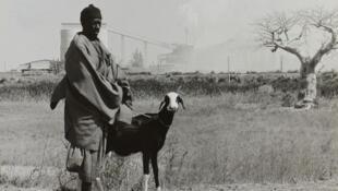 La viande de mouton est très prisée pendant la Tabaski. Photo: un berger au Sénégal.