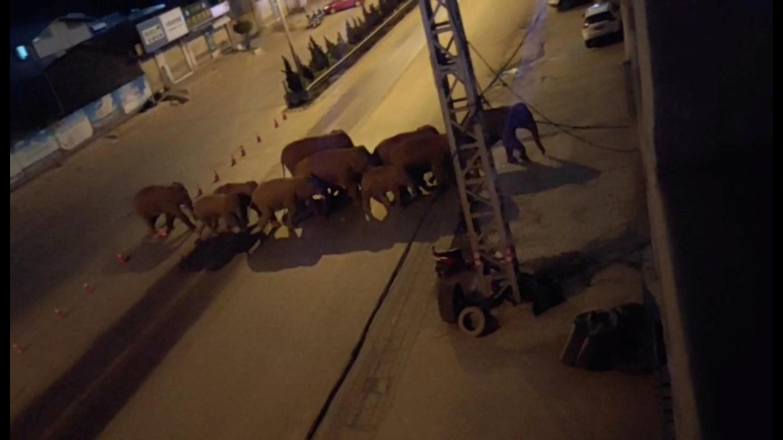 Chine éléphants 2021-05-28T050452Z_1134420572_RC2TON9K9L6V_RTRMADP_3_CHINA-ELEPHANTS