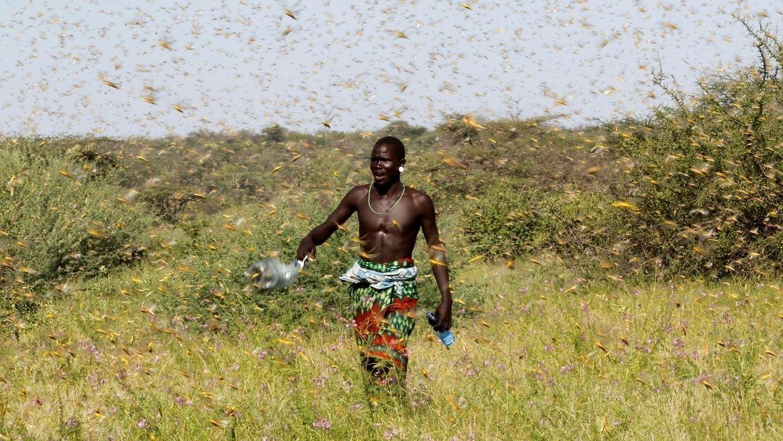 Wani mazaunin kauyen Lemasulani dake lardin Samburu a Kenya, yayin kokarin korar Farin dangon da suka afkawa gonakinsu. 17/01/2020.