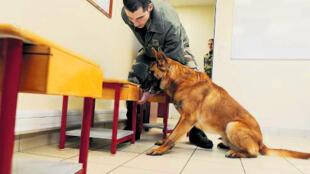 Aspirant, o cachorro que detecta o câncer da próstata.