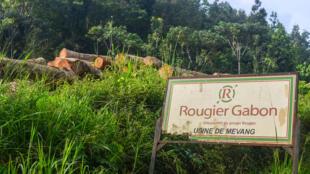 Le groupe Rougier gère des zones forestières en Afrique mais s'occupe aussi de l'export du bois.