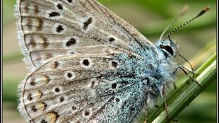 Cientistas japoneses observaram mutações genéticas em borboleta da região de Fukushima.