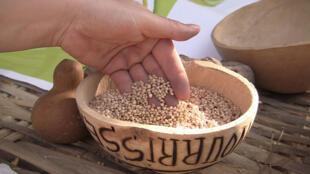 Les semences, premier maillon de la chaîne alimentaire, sont menacées de diversité.
