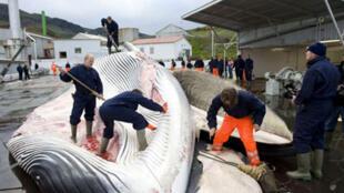Caçadores de baleia na Islândia.