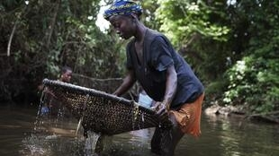 A woman uses a net to try and catch fish in a pool of water near the mining town of Bumbuna in Sierra Leone
