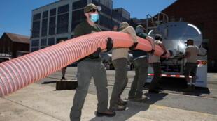 Les saumons sont transvasés du camion-citerne jusqu'à la mer à Mare Island, par un tuyau.