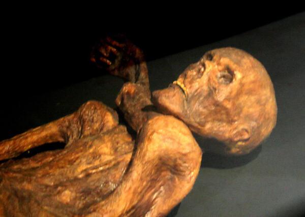 Reconstitution de la momie d'Ötzi présentée au musée de Préhistoire de Quinson (Alpes-de-Haute-Provence, France, sud-est)