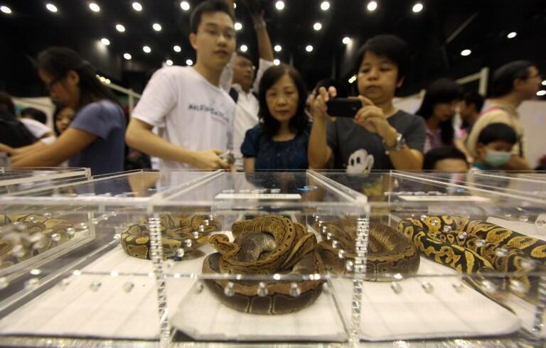 Triển lãm Quốc tế về động vật bò sát ở Hồng Kông. Ảnh chụp ngày 17/06/2010.