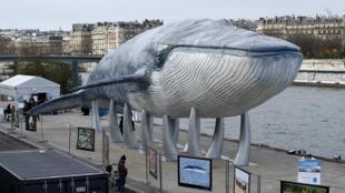 Tượng con Cá voi khổng lồ được trưng bày bên bờ sông Seine, thủ đô Paris, nhân Thượng đỉnh về Khí hậu COP21.