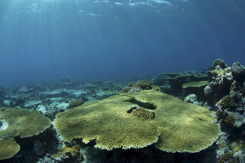 Los océanos se están calentando y acidificando. Esto afecta a los corales y animales de concha.