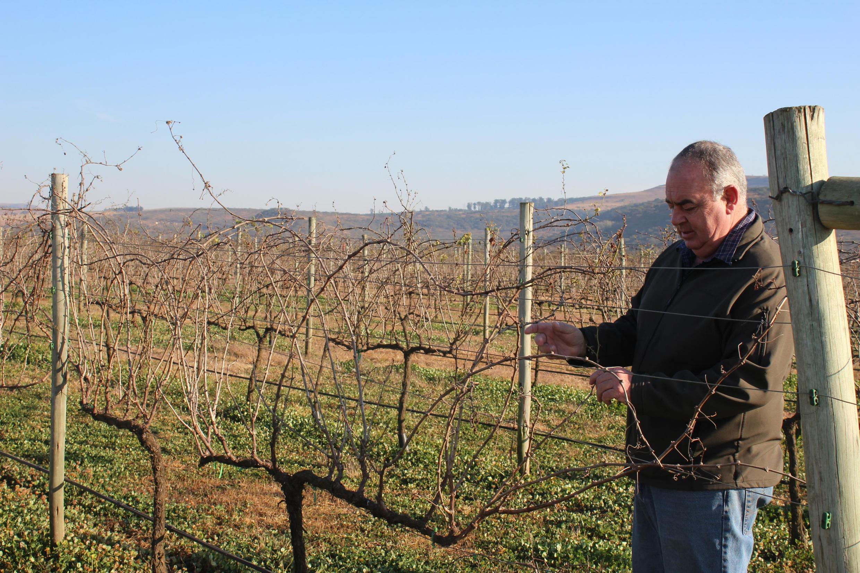 Mauritz Koster devant son vignoble au pied des montagnes du Drakensberg, en Afrique du Sud. La nation arc-en-ciel entretient une relation très ancienne avec le vin, et le pays est classé au 8e rang des producteurs mondiaux.