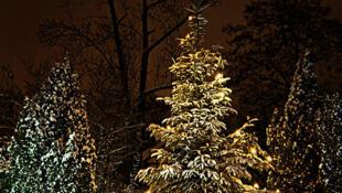Le sapin au coeur de la tradition de Noël au Danemark