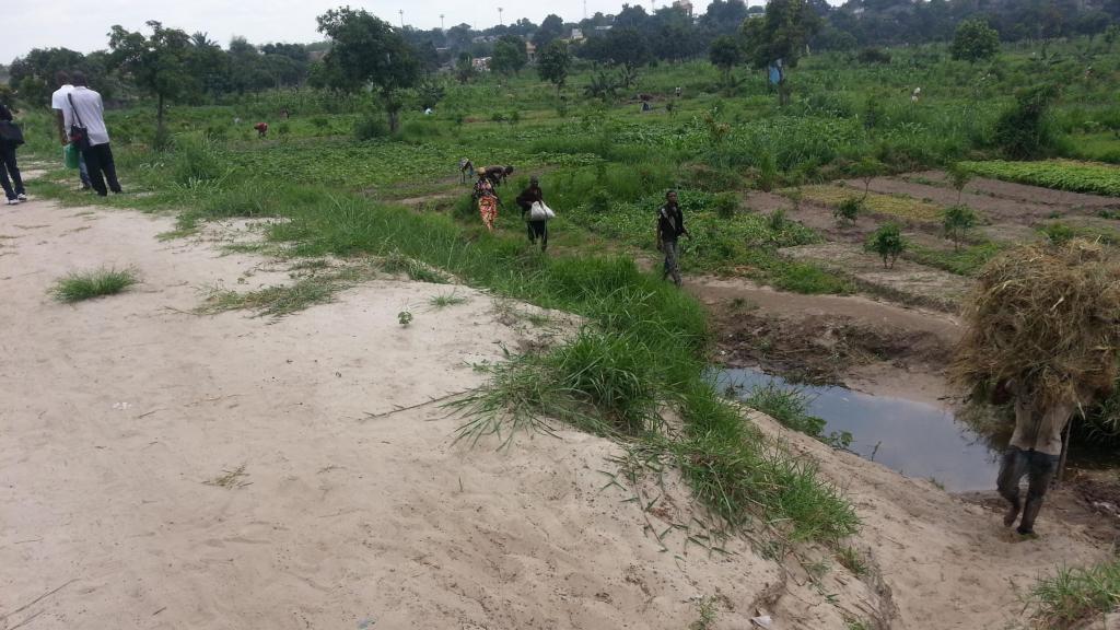 Périmètres maraichers dans la périphérie de la ville de Kinshasa en RDC.